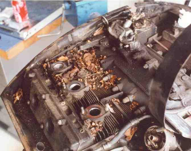 Mouse Nest In 911 Jpg