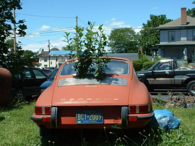 PorscheTree1189454307.jpg