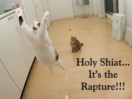 [Image: cat_rapture1305843596.jpg]