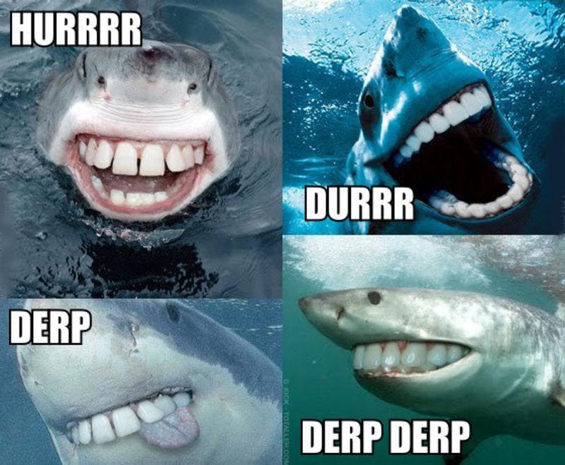 derp+derp+derp+derp1317151289 the 25 funniest shark memes complex